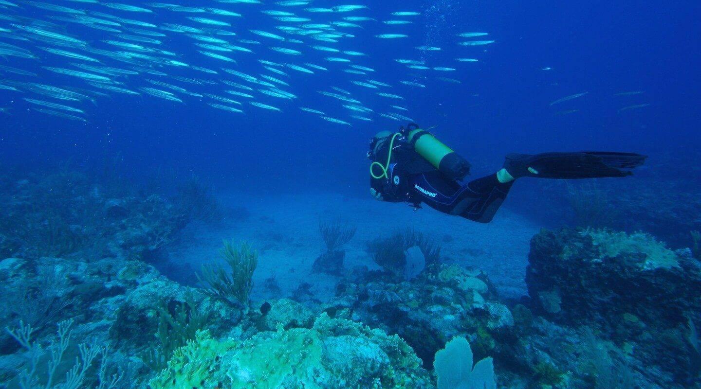 Serial Divers